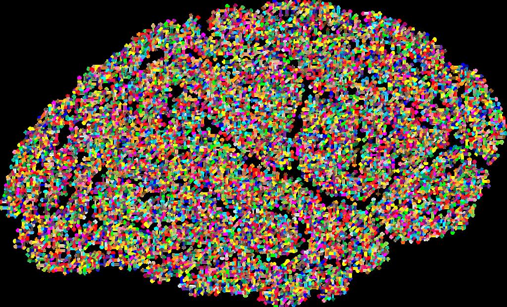 Mitos y verdades sobre el cerebro
